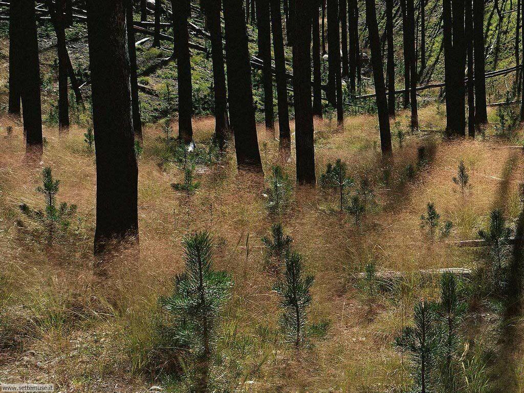 Foto desktop di boschi e foreste 084