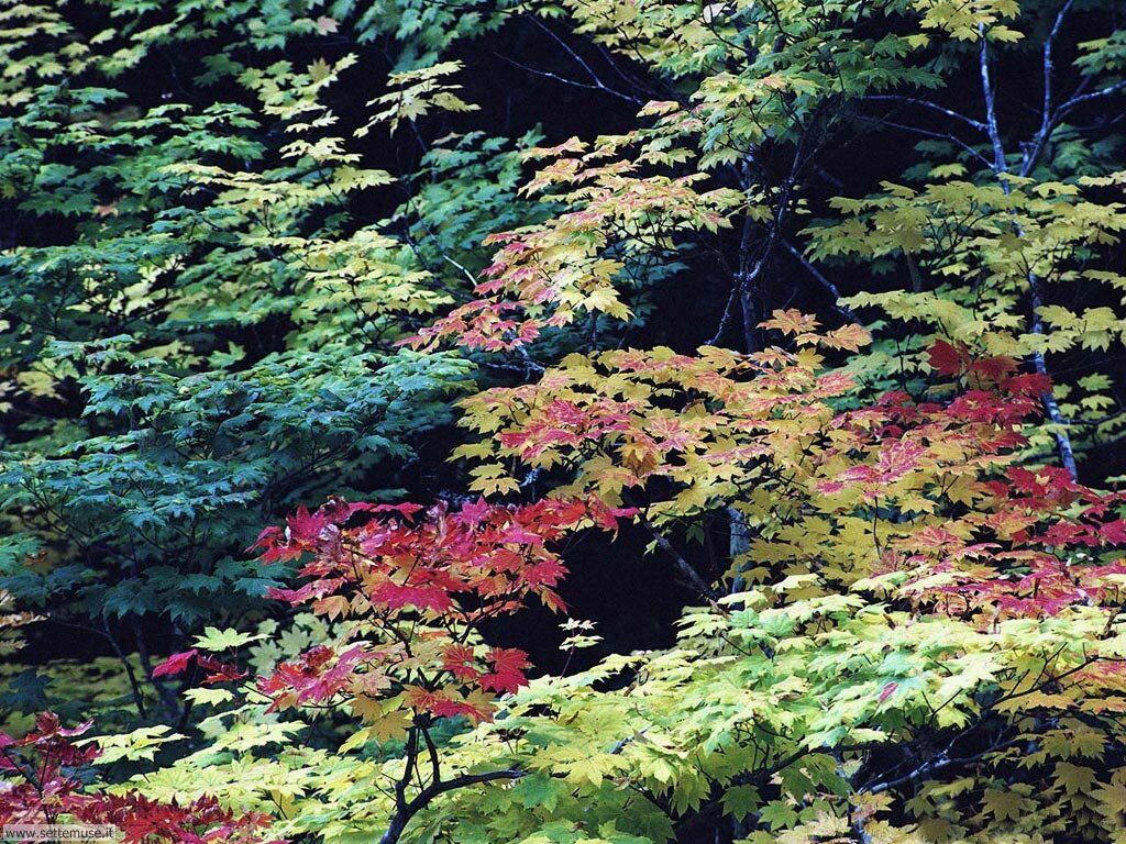 Foto desktop di boschi e foreste 085