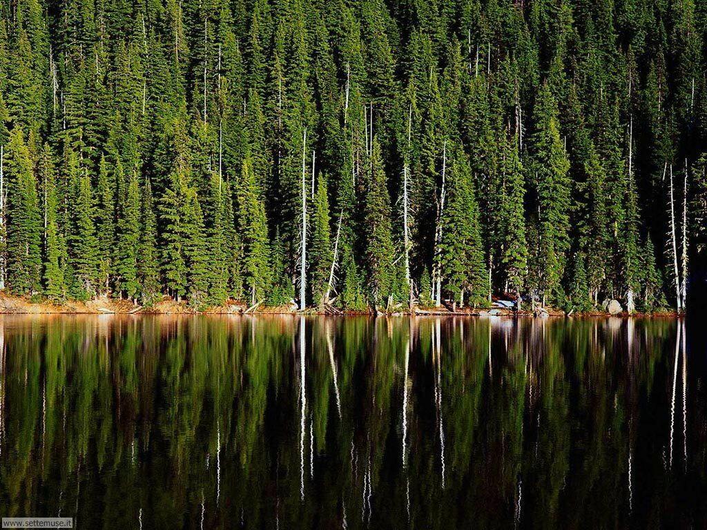 Foto desktop di boschi e foreste 086