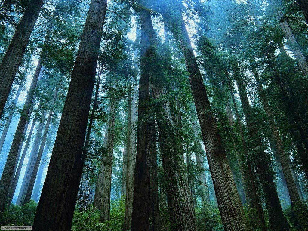 Foto desktop di boschi e foreste 087