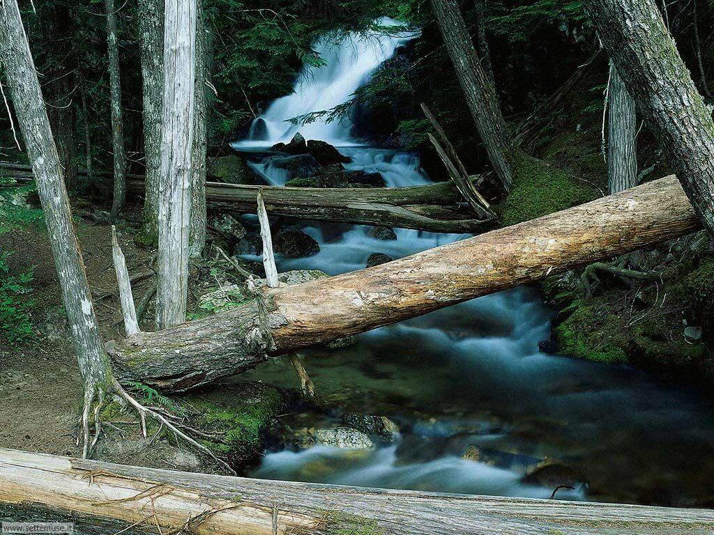Foto desktop di boschi e foreste 089