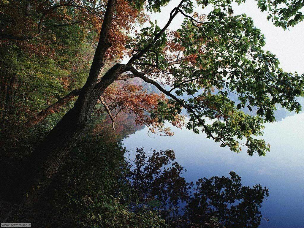 Foto desktop di boschi e foreste 090