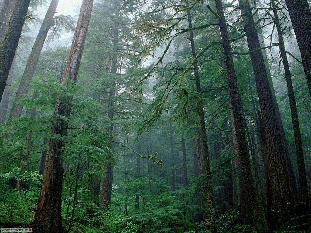Foto desktop di boschi e foreste 092