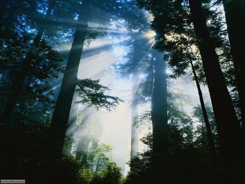 Foto desktop di boschi e foreste 094