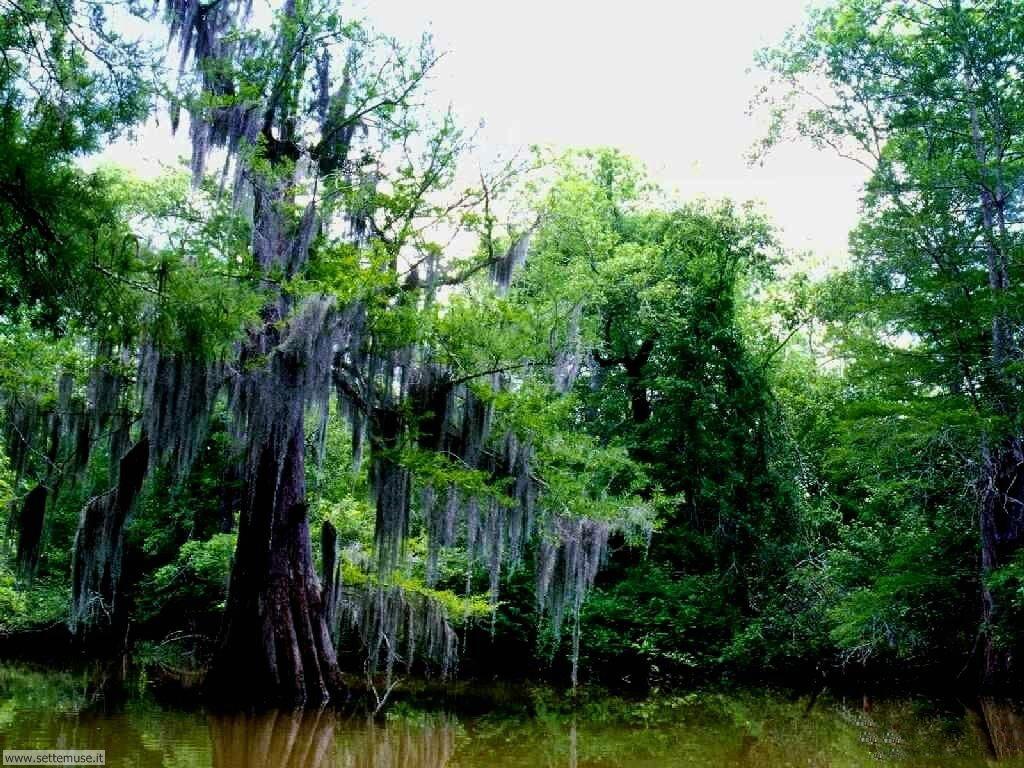Foto desktop di boschi e foreste 095