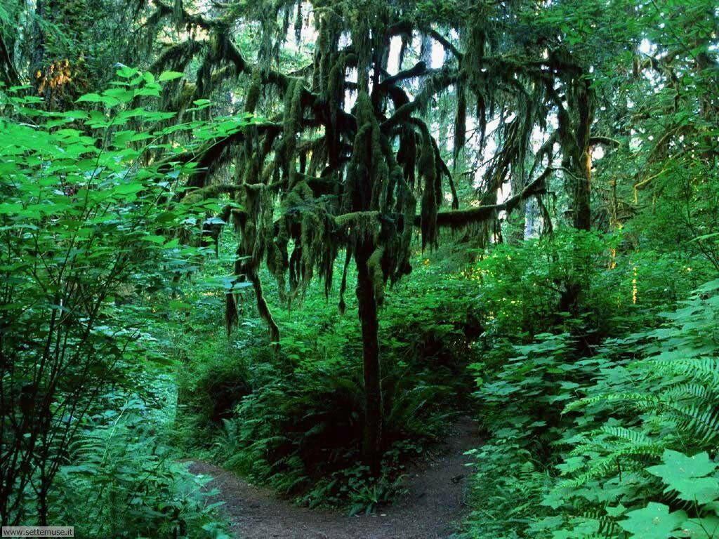 Foto desktop di boschi e foreste 096