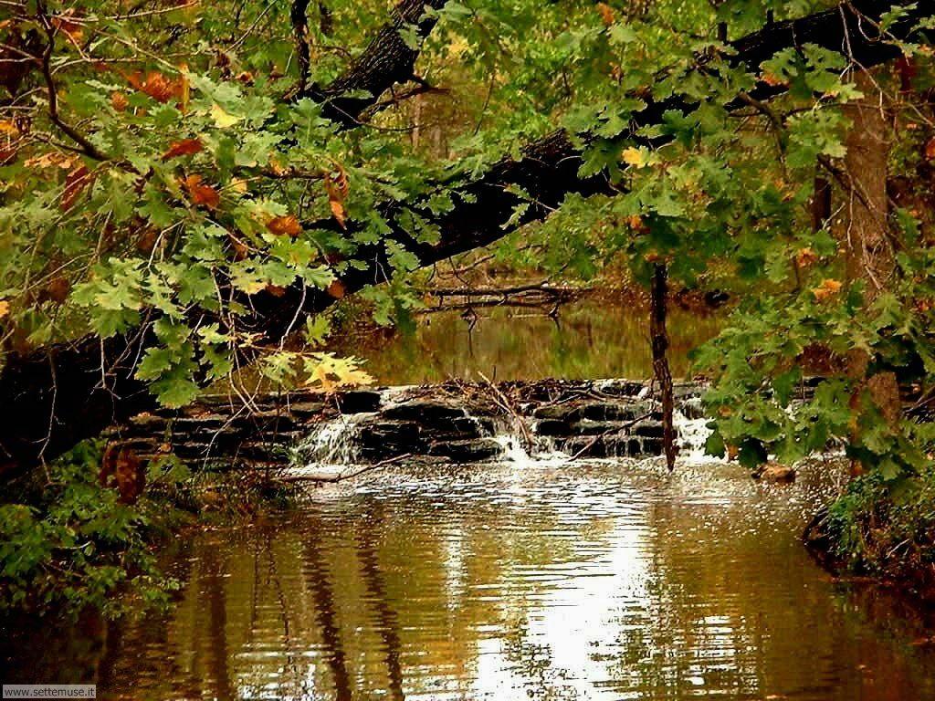 Foto desktop di boschi e foreste 097