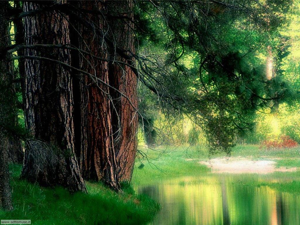 Foto desktop di boschi e foreste 098