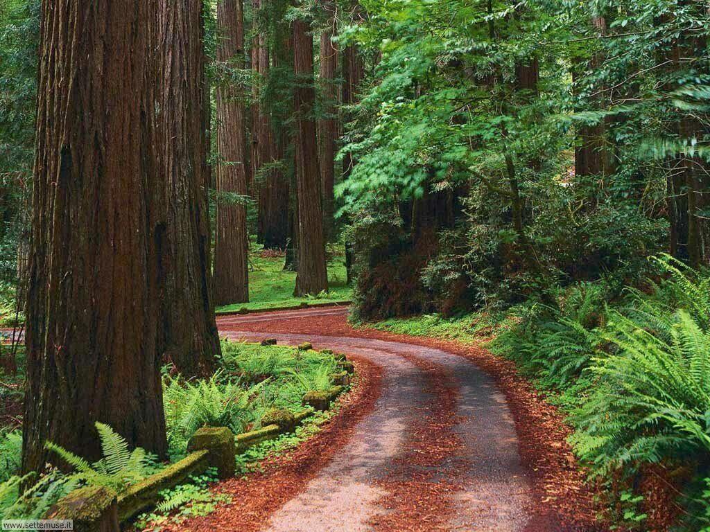 Foto desktop di boschi e foreste 099