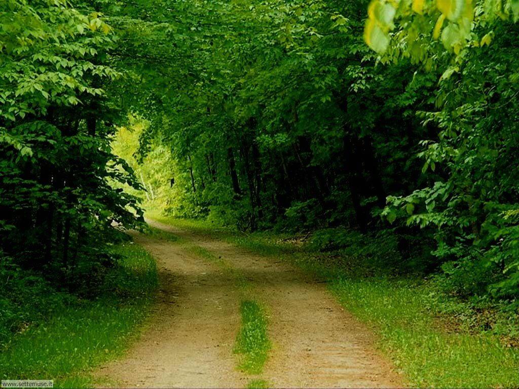 Foto desktop di boschi e foreste 100