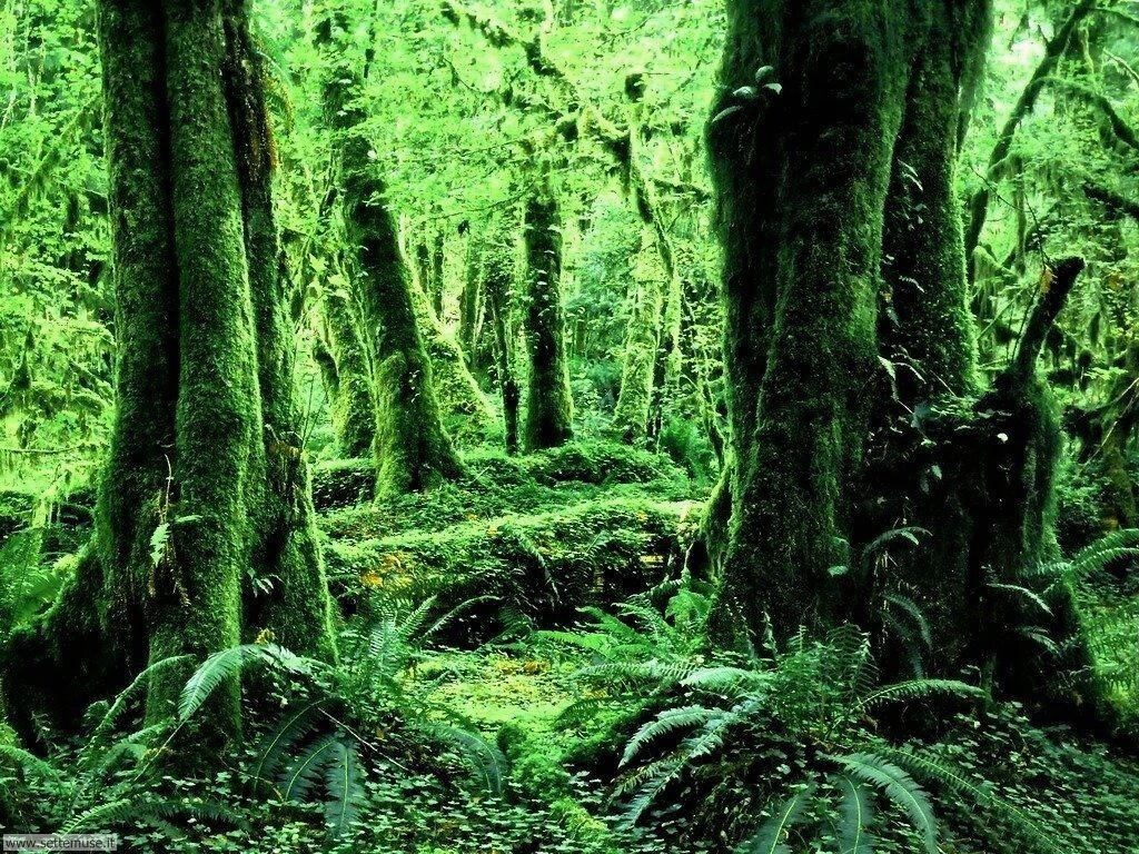 Foto boschi e foreste per sfondi desktop 2 for La cabina nel bosco 2 film completo