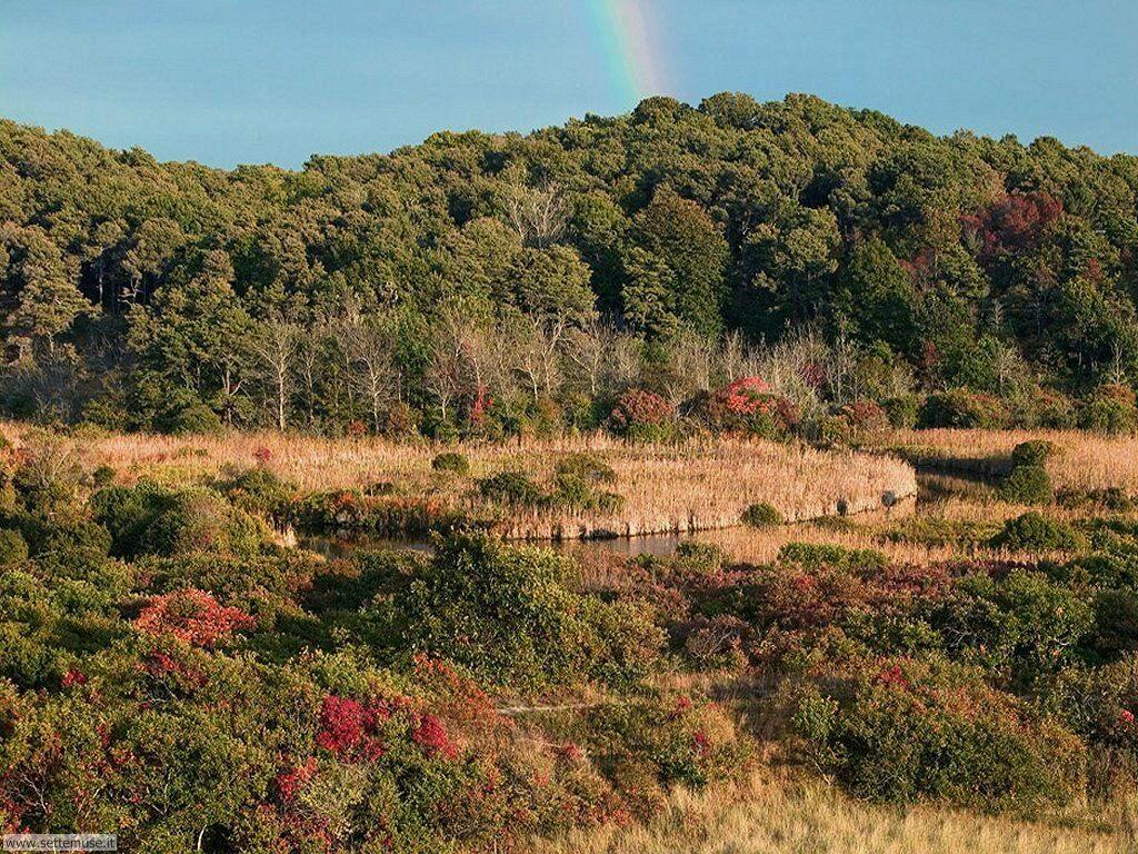 Foto desktop di boschi e foreste 031