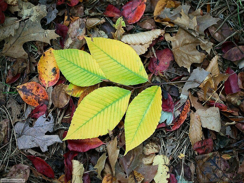 Foto desktop di boschi e foreste 032