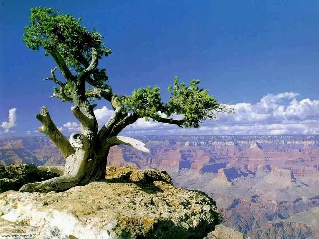 Foto desktop di deserti e canyon 023
