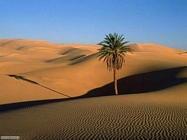 Foto desktop di deserti e canyon