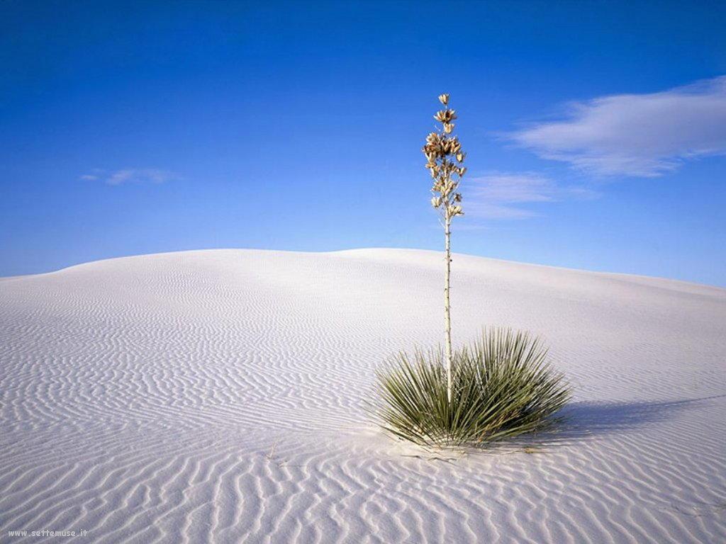 Foto desktop di deserti e canyon 046