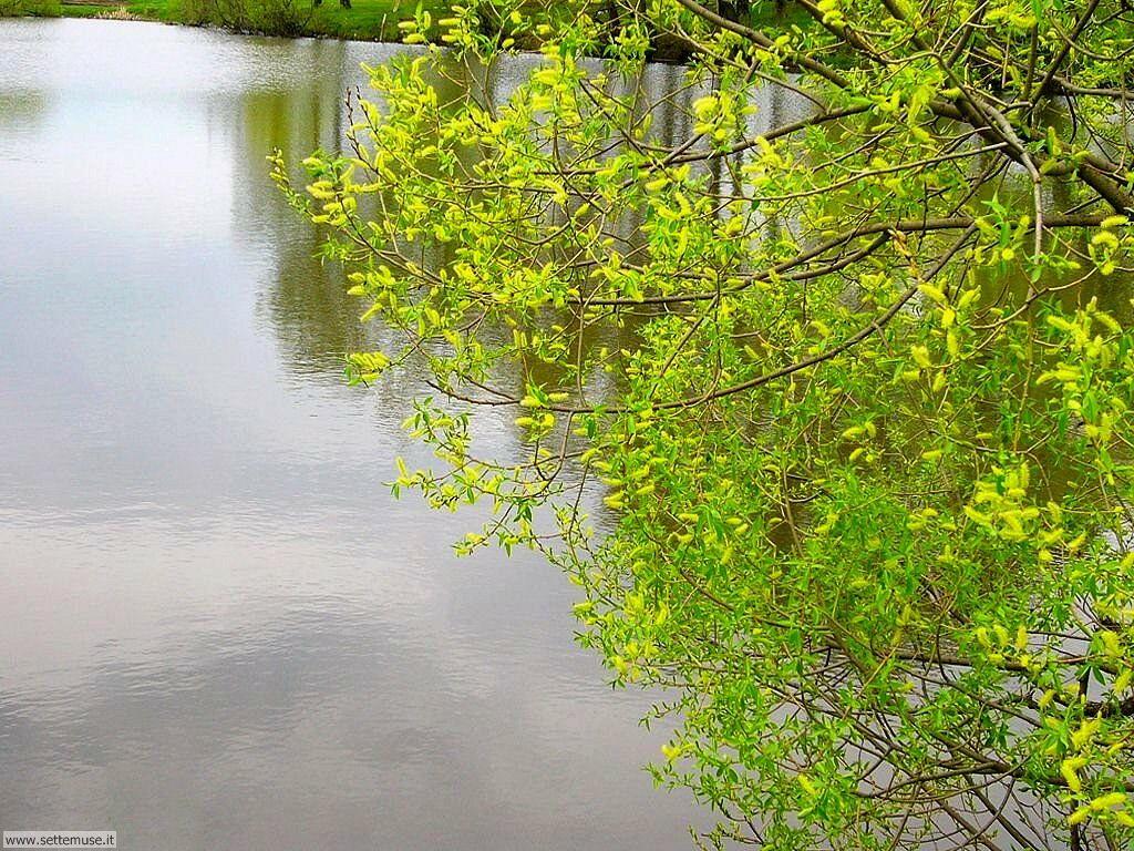 Foto desktop di fiumi e torrenti 025