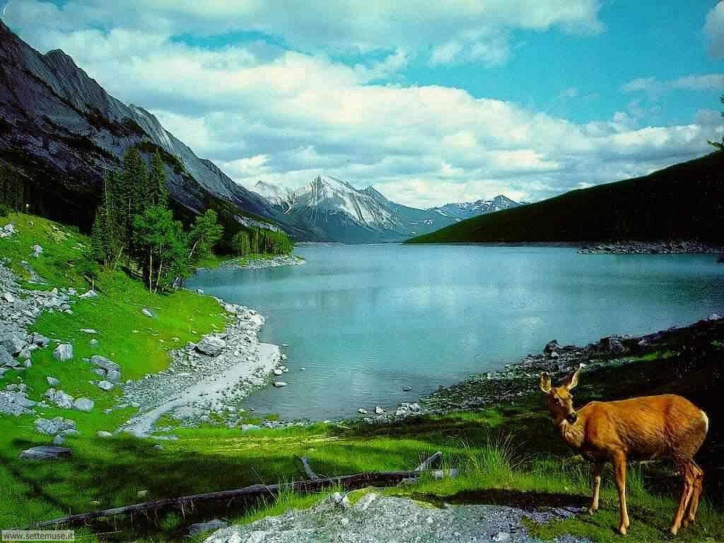 Foto desktop di laghetti di montagna 036