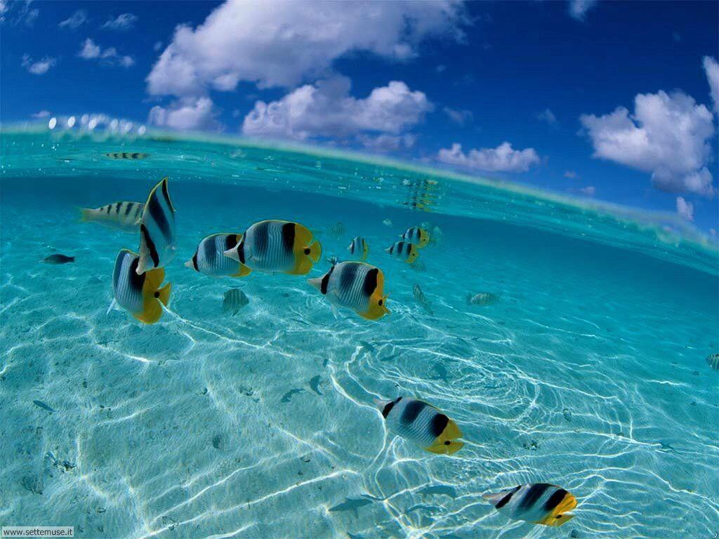 foto di mare e onde per sfondi desktop