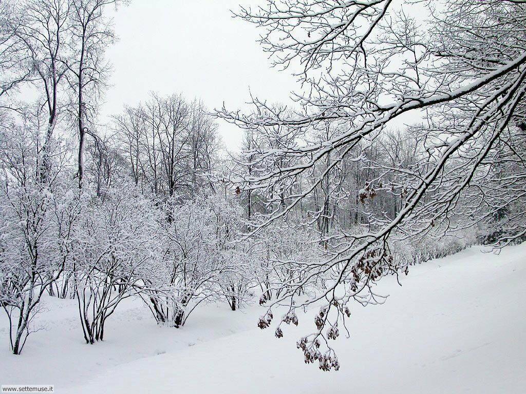 Foto desktop di neve e paesaggi innevati 004
