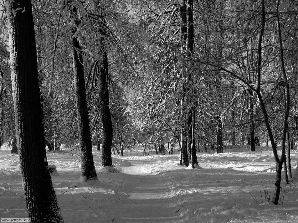 Foto desktop di neve e paesaggi innevati 007