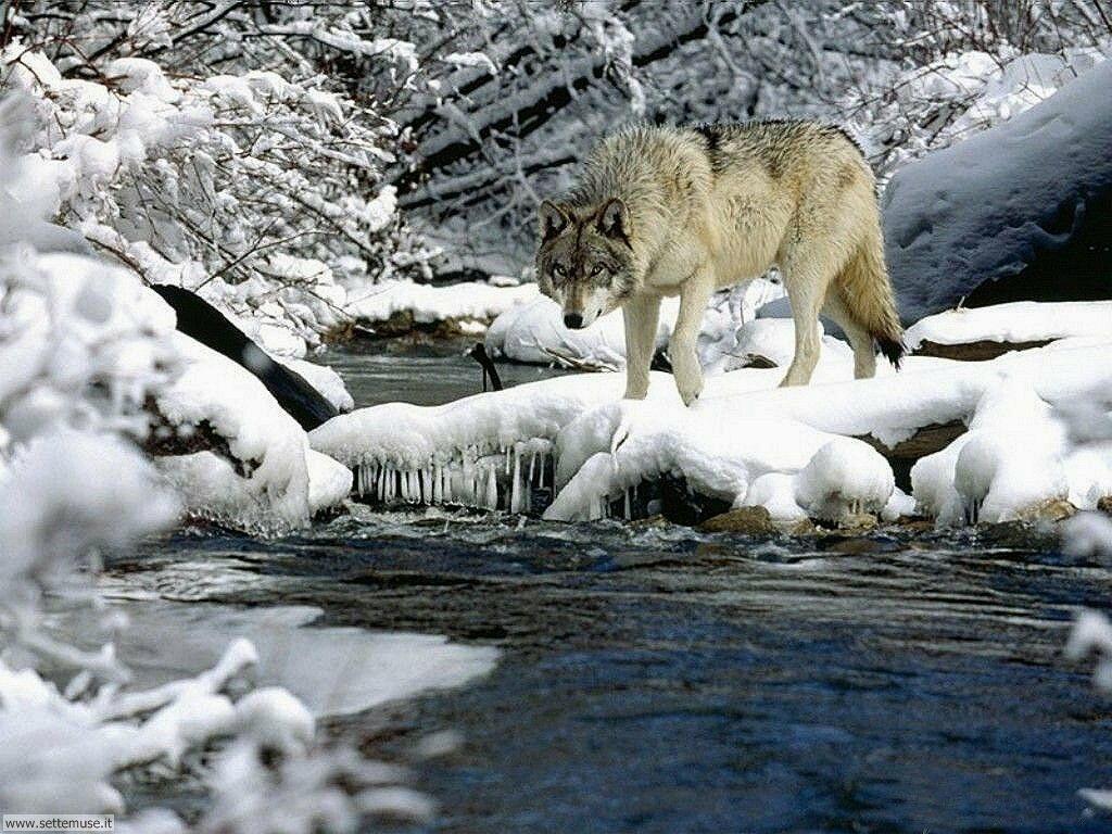 Foto desktop di neve e paesaggi innevati 013