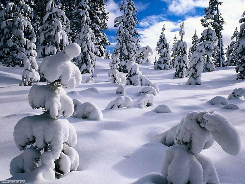 Foto desktop di neve e paesaggi innevati 015