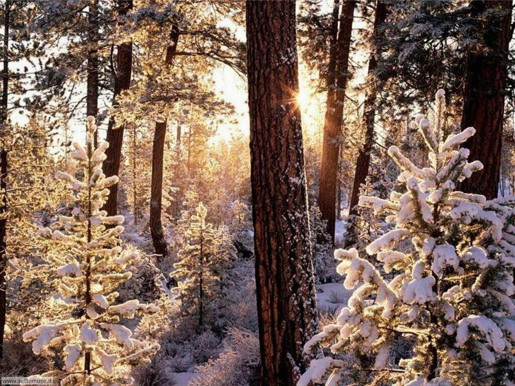 Foto desktop di neve e paesaggi innevati 027