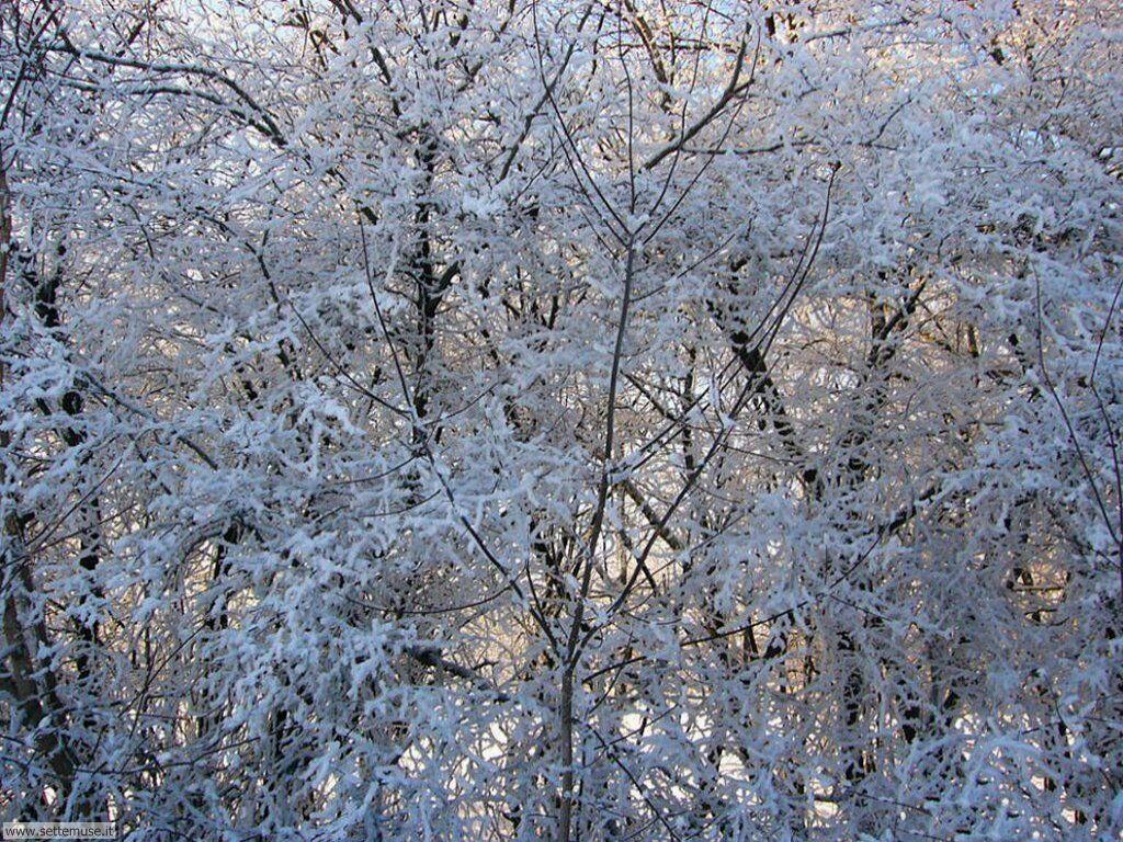 Foto desktop di neve e paesaggi innevati 029