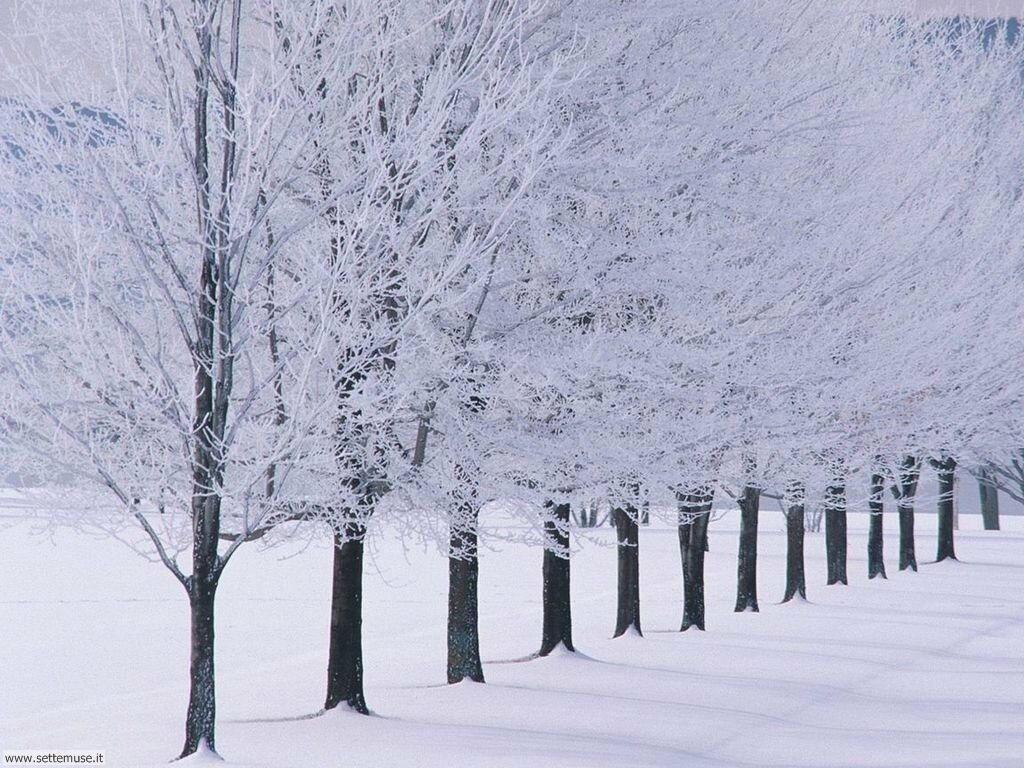 Foto desktop di neve e paesaggi innevati 039