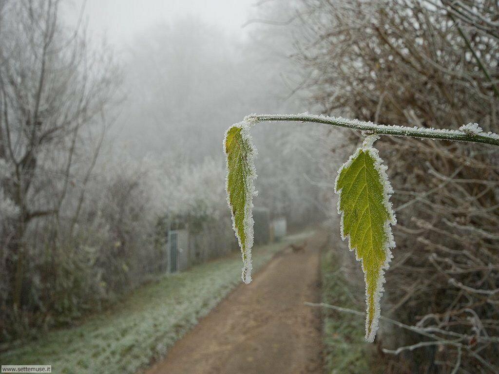 Foto desktop di neve e paesaggi innevati 051