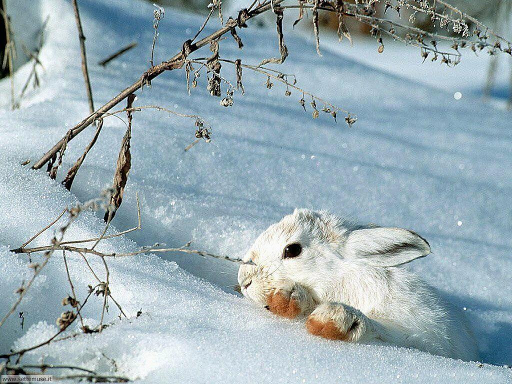 Foto desktop di neve e paesaggi innevati 063