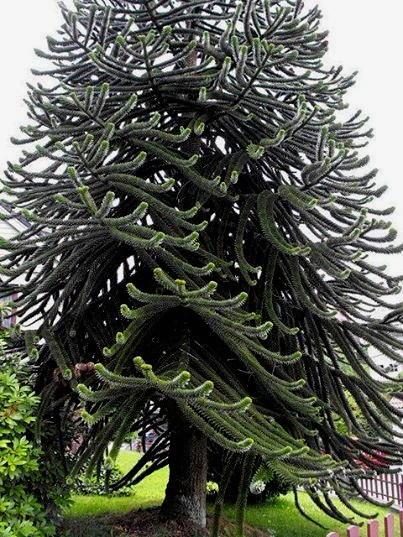 Foto desktop piante strane 002