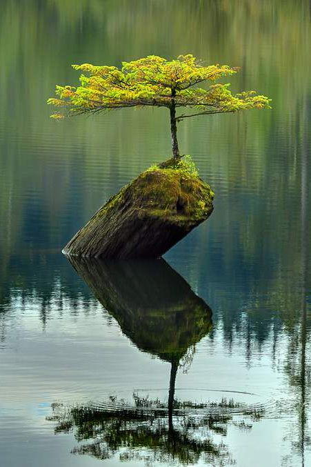 Foto desktop piante strane 028