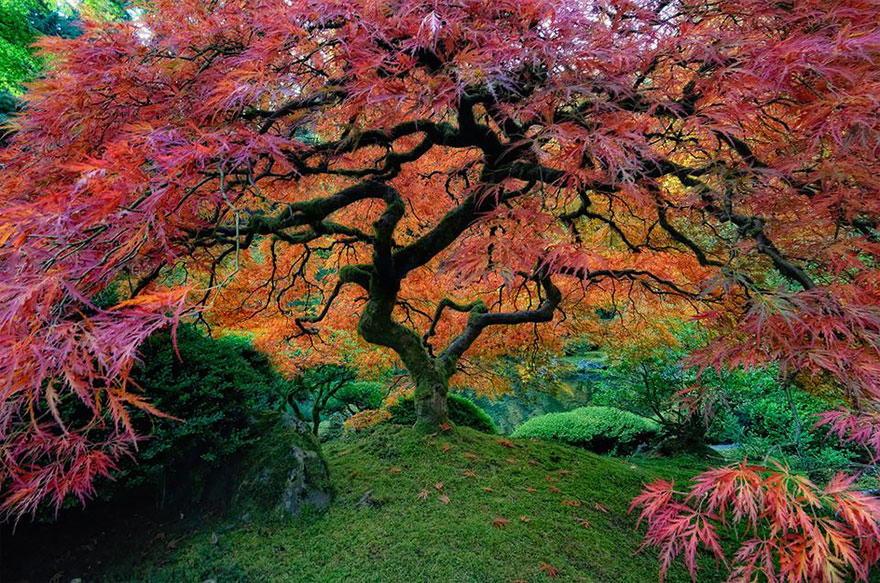 Foto desktop piante strane 033