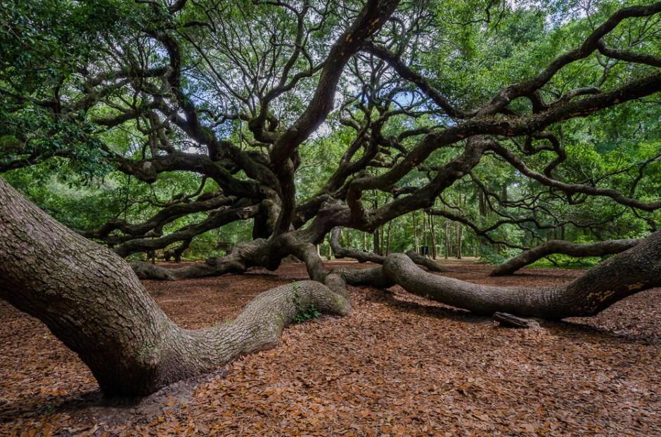 Foto desktop piante strane 034
