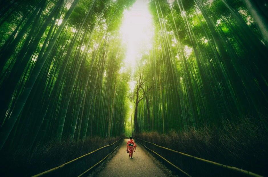 Foto desktop piante strane 037