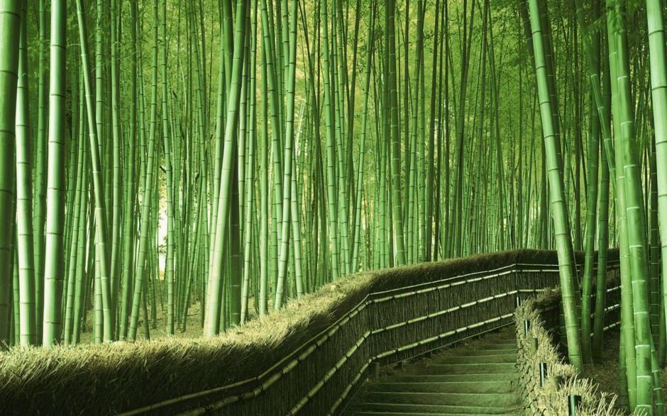 Foto desktop piante strane 038