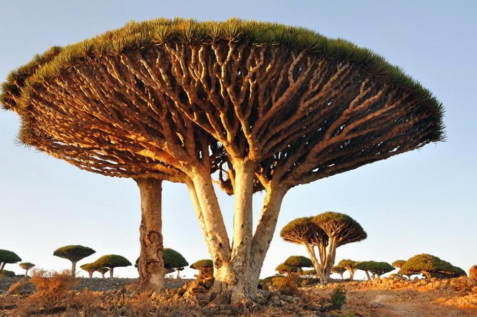 Foto desktop piante strane 040