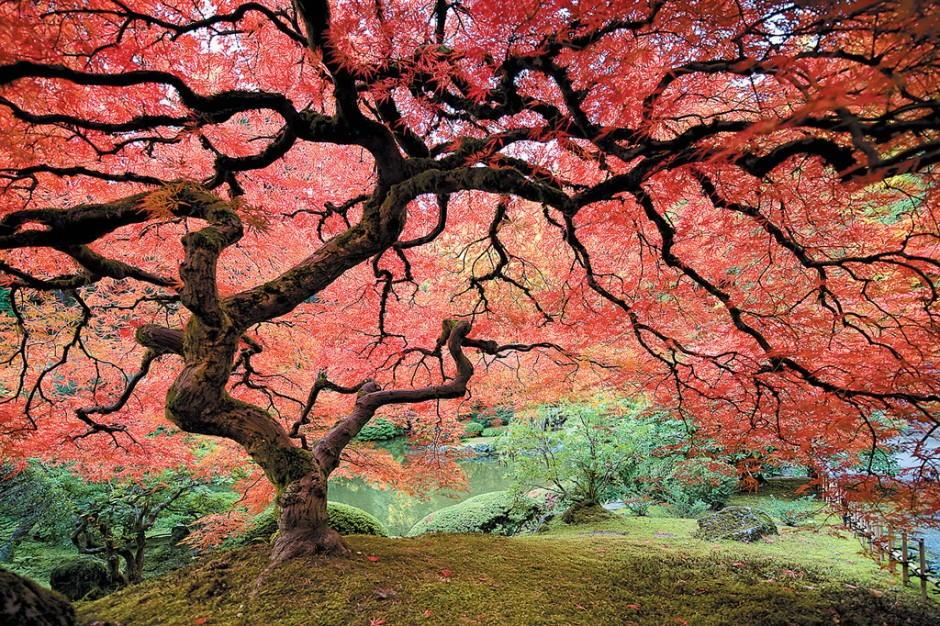 Foto desktop piante strane 042