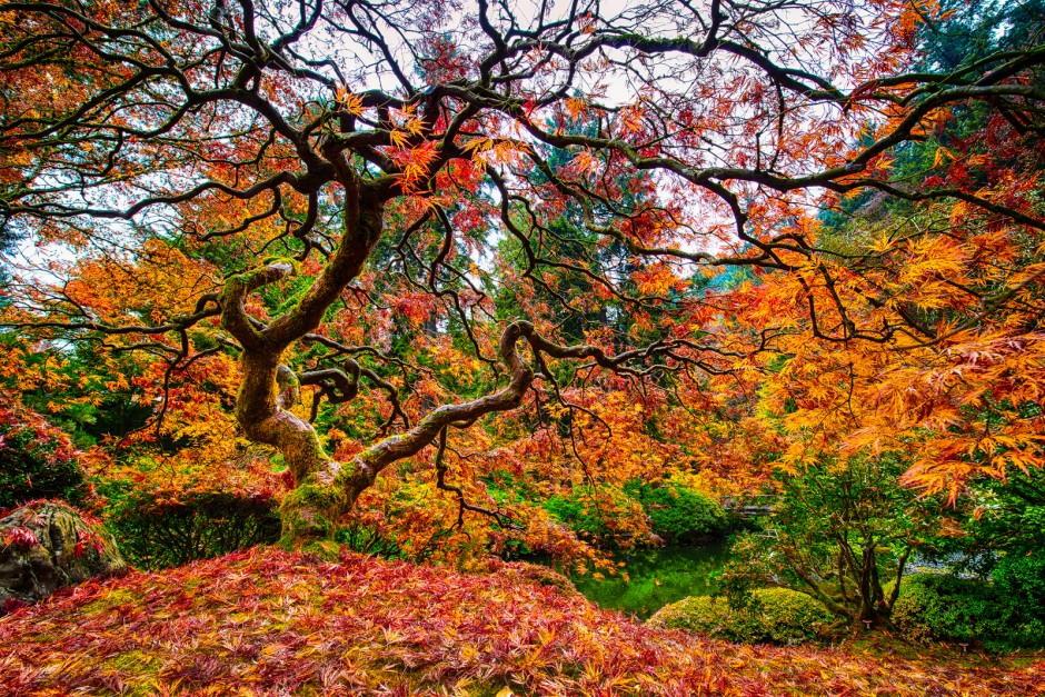 Foto desktop piante strane 043
