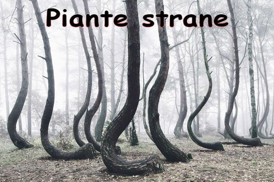 foto di piante molto strane per sfondi