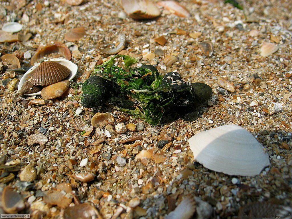 Foto desktop di spiagge da sogno 011