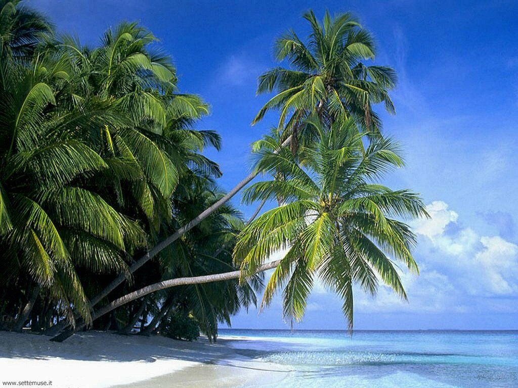 Foto desktop di spiagge da sogno 020