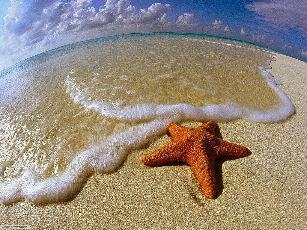 Foto desktop di spiagge da sogno 022