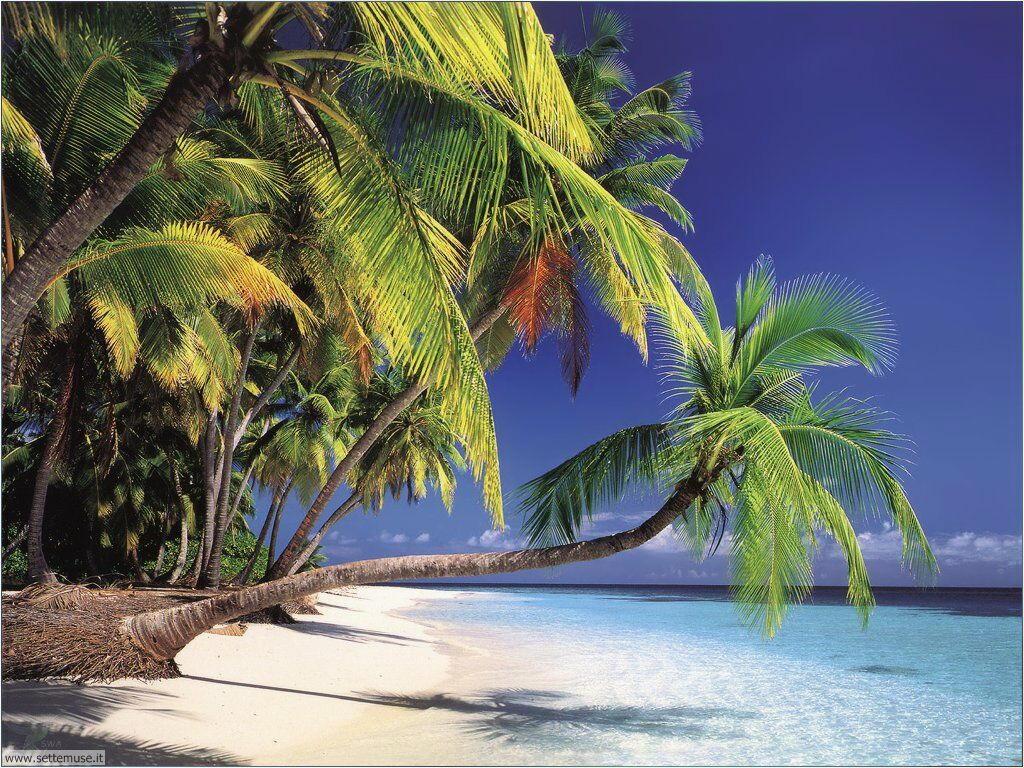 Foto desktop di spiagge da sogno 053