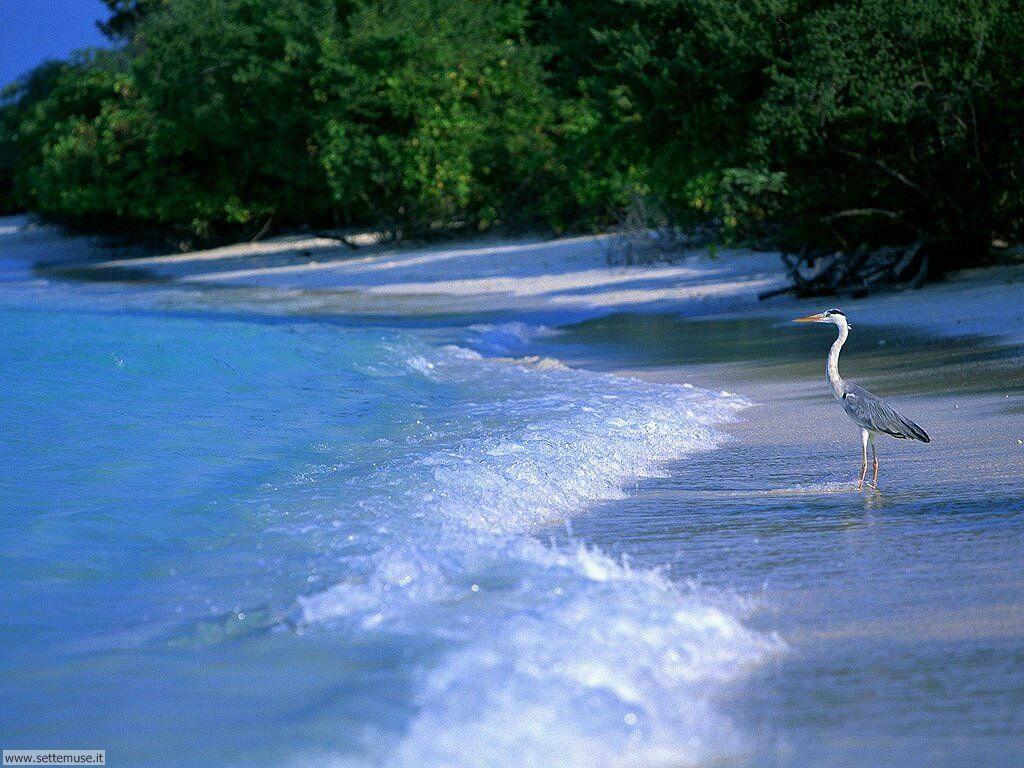 Foto desktop di spiagge da sogno 082