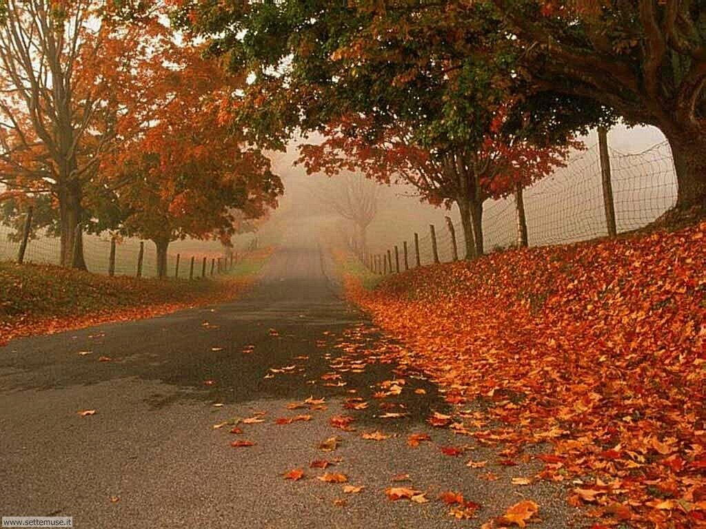 Foto autunno per sfondi desktop for Foto per desktop inverno