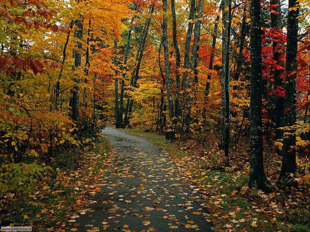 Foto autunno per sfondi desktop for Desktop gratis inverno