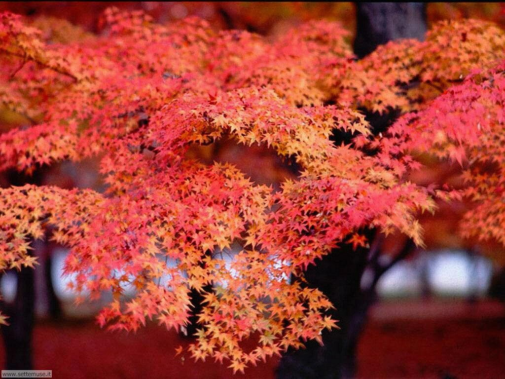 Foto autunno per sfondi desktop for Foto hd desktop